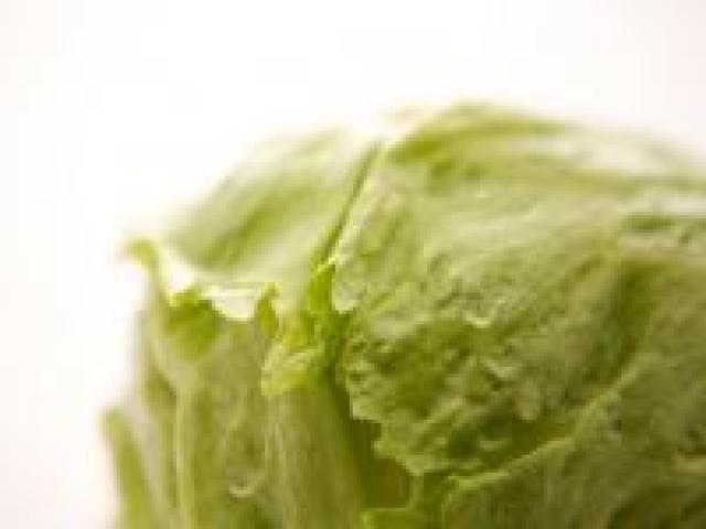 Certified Organic Lettuce - Iceberg