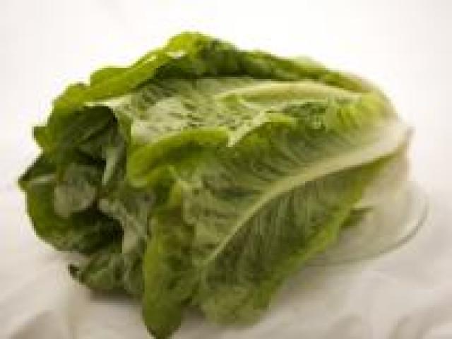 Certified Organic Lettuce - Cos