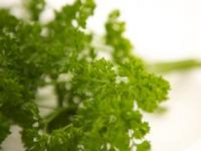 Certified Organic Herbs - Parsley Curley Bunches