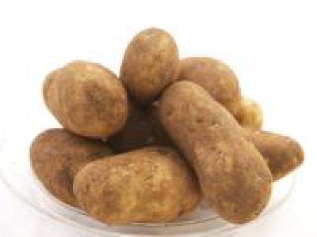 Certified Organic Potatoes - Dutch Cream