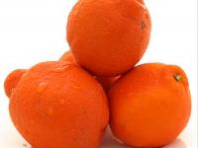 Certified Organic Tangellos - Similar to Mandarins