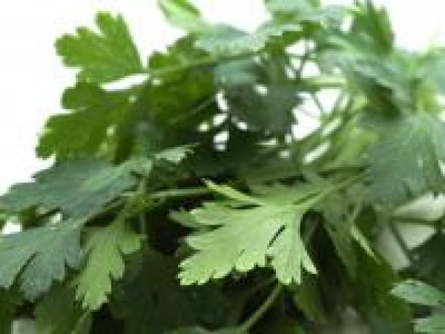 Certified Organic Herbs - Parsley Italian Bunches