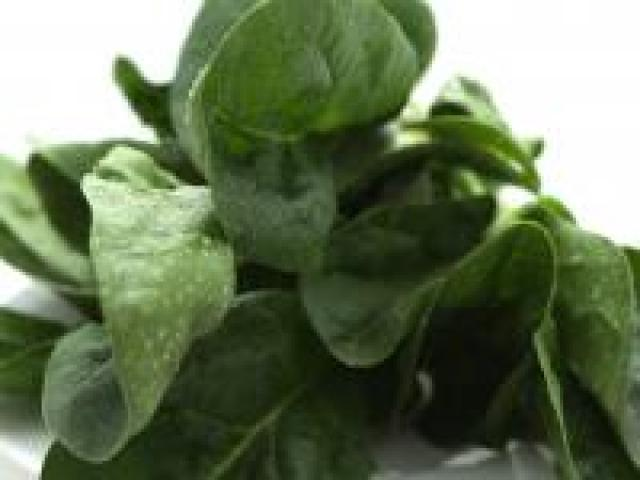Certified Organic Spinach - English Bunches