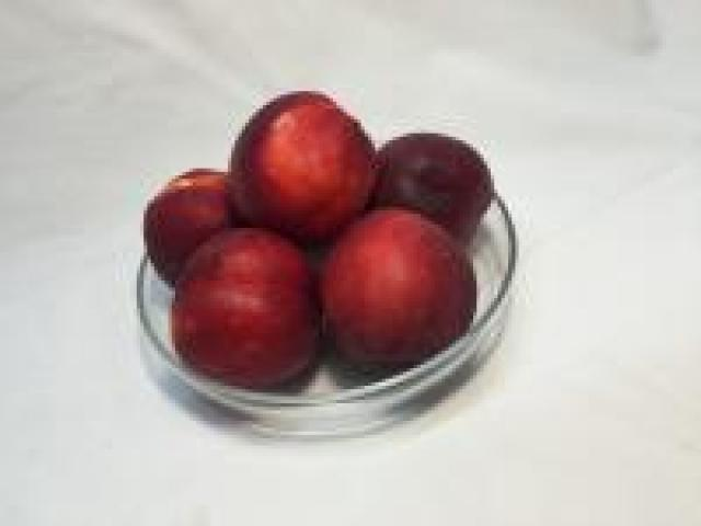 Certified Organic Nectarines - Yellow