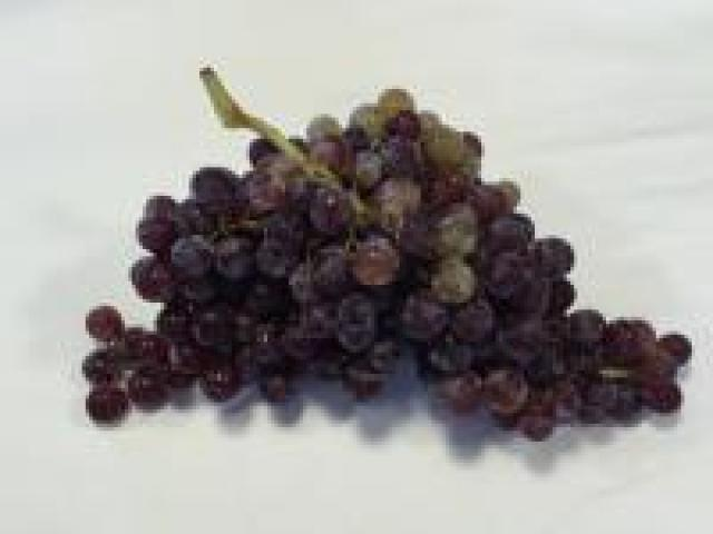 Certified Organic Grapes - Black Muscat