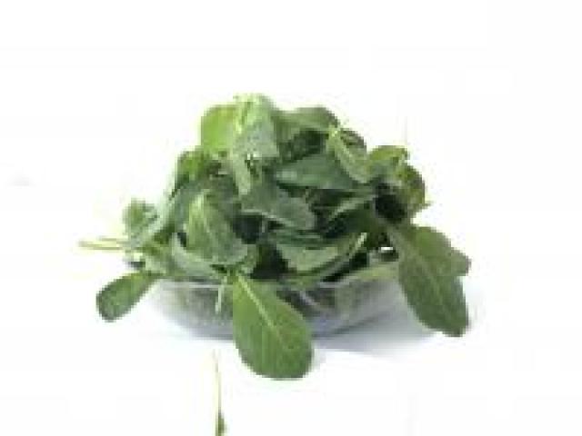 Certified Organic Lettuce - Kale Baby