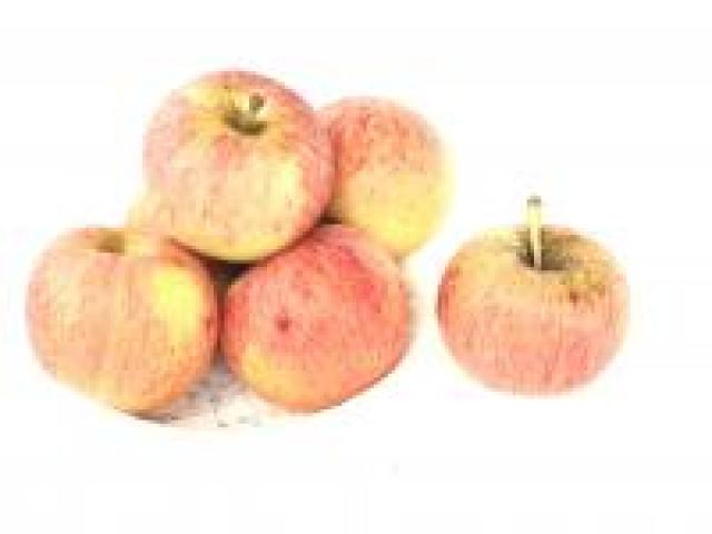 Certified Organic Apples - Gala Bulk
