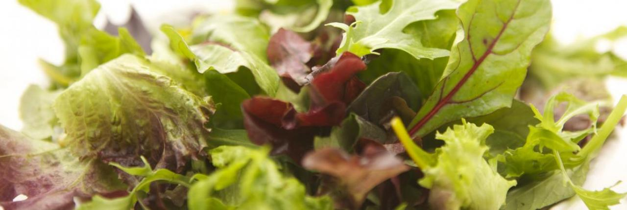 Lettuce Mixed Salad Micro Greens