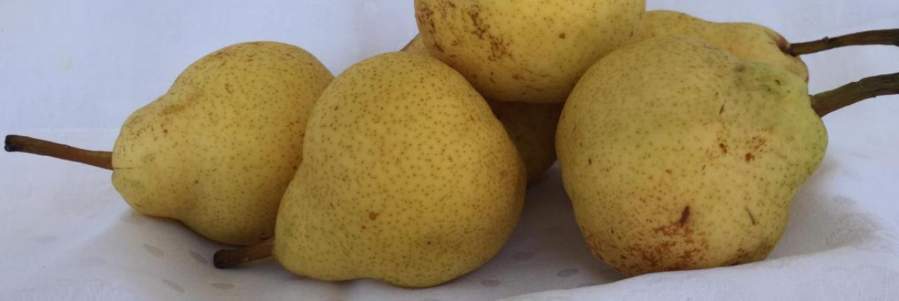 Lovely sweet juicy fragrant Pears