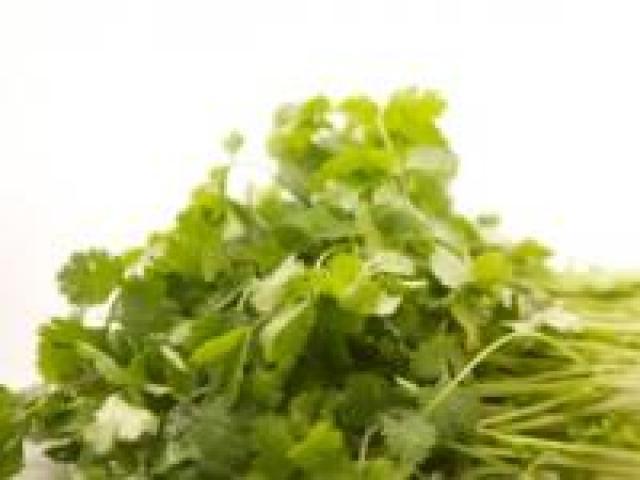 Certified Organic Herbs - Coriander Bunches