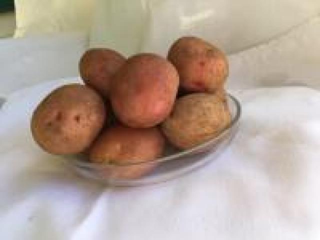 Certified Organic Potatoes - Pontiac