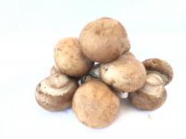 Certified Organic Mushrooms - Swiss Brown